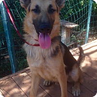 Adopt A Pet :: Otto - Santa Ana, CA
