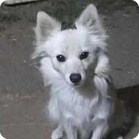 Adopt A Pet :: Kaya - Sunnyvale, CA
