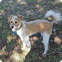 Adopt A Pet :: Elton - Trenton, NJ