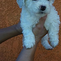Adopt A Pet :: Zack - Phoenix, AZ