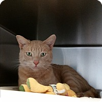 Adopt A Pet :: Butters - Chippewa Falls, WI