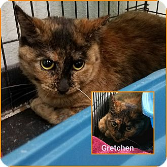 Domestic Mediumhair Cat for adoption in California City, California - Gretchen