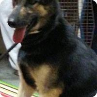 Adopt A Pet :: Lou Lou - Loogootee, IN