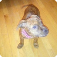 Adopt A Pet :: Baby Tigeress - Rockville, MD