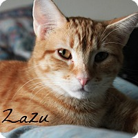 Adopt A Pet :: Zazu - McKinney, TX