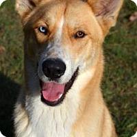 Adopt A Pet :: Calvin - Ridgeland, SC