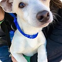 Adopt A Pet :: Wesley - Spring Valley, NY
