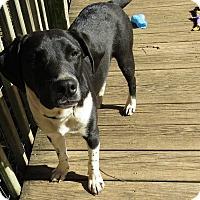 Adopt A Pet :: Harry - Plainfield, CT