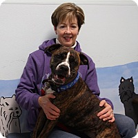 Adopt A Pet :: Greta - Elyria, OH