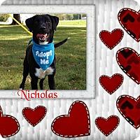 Adopt A Pet :: Nicholas - Buffalo, IN