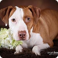 Adopt A Pet :: June - Princeton, MN