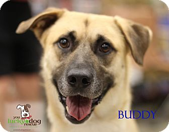 Shepherd (Unknown Type) Mix Dog for adoption in Alpharetta, Georgia - Buddy E.