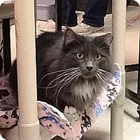 Adopt A Pet :: Minnie - Milwaukee, WI
