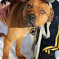 Adopt A Pet :: Carmelo - Tinton Falls, NJ
