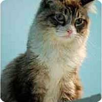 Adopt A Pet :: Lacey - Marietta, GA