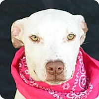 Adopt A Pet :: Cloud - Plano, TX