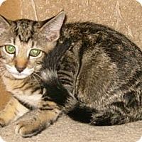 Adopt A Pet :: Picasso - Dallas, TX