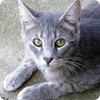 Adopt A Pet :: Zoom Zoom - Gonzales, TX