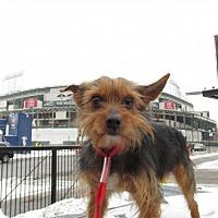 Adopt A Pet :: Cody - Chicago, IL