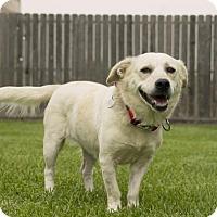 Adopt A Pet :: Jaime - Houston, TX