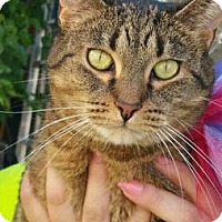 Adopt A Pet :: SASY - Ridgewood, NY