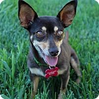 Adopt A Pet :: Selia - Sacramento, CA