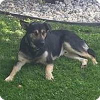 Adopt A Pet :: FLOPPY - Winnipeg, MB