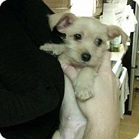 Adopt A Pet :: Bruno - Custer, WA