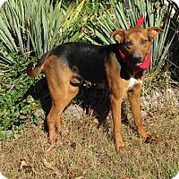 Adopt A Pet :: Hans - Oakland, AR