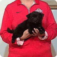 Adopt A Pet :: Chloe - New Philadelphia, OH
