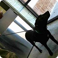 Adopt A Pet :: COOPER - Tulsa, OK