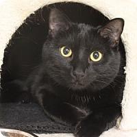 Adopt A Pet :: Travis - Naperville, IL