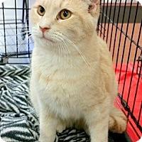 Adopt A Pet :: Louie - Concord, NC