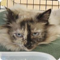 Adopt A Pet :: Havana - Birmingham, AL