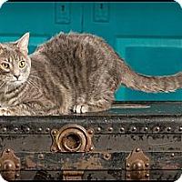 Adopt A Pet :: Penelope - Owensboro, KY