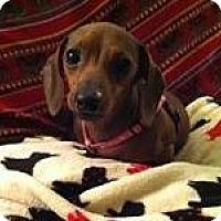 Adopt A Pet :: DUCHESS - Portland, OR