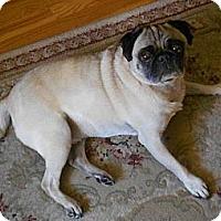 Adopt A Pet :: Maynard - Hinckley, MN