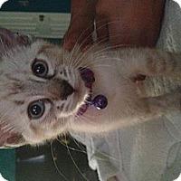 Adopt A Pet :: Balance - Santa Monica, CA