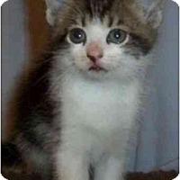 Adopt A Pet :: Tex - Reston, VA