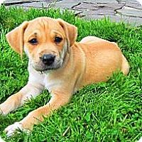 Adopt A Pet :: Mona - Alexandria, VA