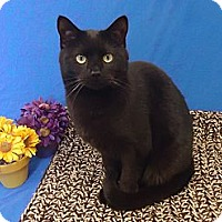 Adopt A Pet :: Orion - Larned, KS