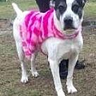 Adopt A Pet :: Umba