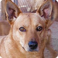 Adopt A Pet :: Stassi - Fowler, CA