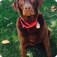 Adopt A Pet :: Koco - Torrance, CA