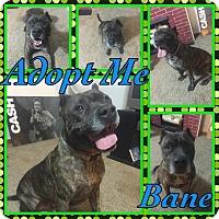 Adopt A Pet :: Bane - Cheney, KS