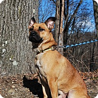 Adopt A Pet :: Olaf - New Castle, PA