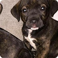 Adopt A Pet :: Reese - Danbury, CT