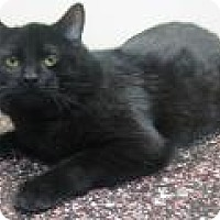 Adopt A Pet :: Mr. Poppers - Gary, IN