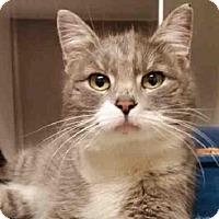 Adopt A Pet :: LUELLA - Murray, UT
