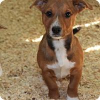 Adopt A Pet :: Cortland - Harmony, Glocester, RI